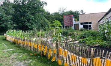 Lees meer over het artikel Deelnemers WIJ 3.0 leggen tuin Rintveld aan voor cliënten Altrecht